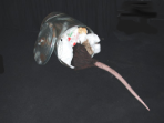 (Animatronic) Rat