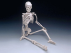 "Skeleton: Mr. Thrifty Skeleton 4th quality 33.5"" tall without stand--Free Shipping"