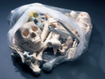 12 POUND Bag of Bones - Free Shipping