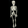 Skeleton: Easy on the Pocket Paul Skeleton - Free Shipping