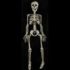 Skeleton: Economy Eddie Skeleton - Free Shipping