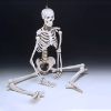 "Skeleton: Budget Bucky Skeleton 4th quality 5'6"" tall without stand--FREE shipping"
