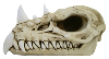 Skull: Dragon Skull (Large)